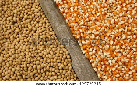 soybeans and corn seeds - stock photo