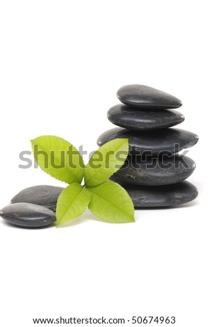 spa background- fern leaves and zen stones