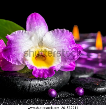 spa background of purple orchid dendrobium, green leaf Calla lily, purple candles and beads on zen stones with drops, closeup   - stock photo