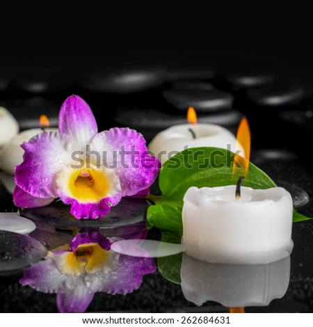 spa background of purple orchid dendrobium, green leaf with dew and candles on black zen stones in reflection water, closeup   - stock photo
