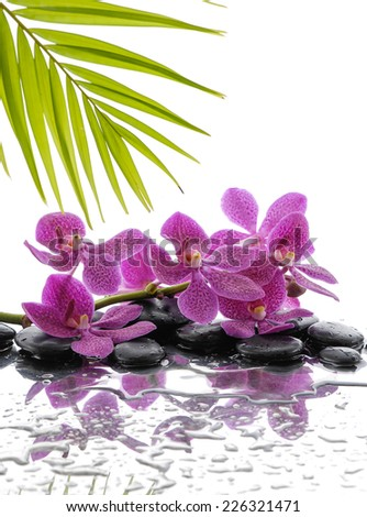 Spa Background with palm and wet stones with pink orchid  - stock photo
