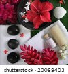 spa beauty objects for body care, red exotic tropical flowers, sea shells, black stones, towels  - stock photo