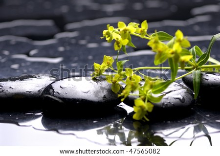 Spa black stones and leaves with water drops