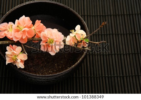 Spa Concept- bamboo grove and spring flower in bowl - stock photo