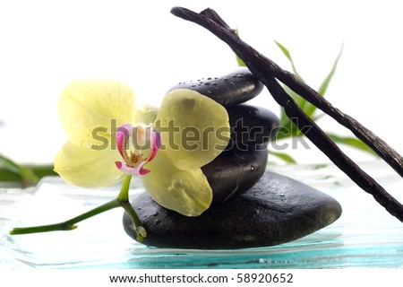 spa concept black stone with orchid