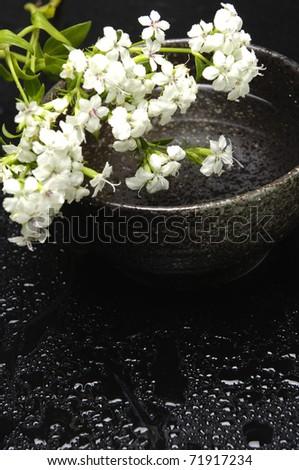 Spa Concept- bowl of white spring flower - stock photo