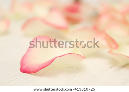 Spa concept. Flower petals on white wooden background, close up - stock photo