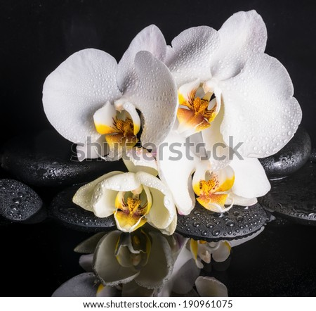 Spa concept of beautiful white with yellow orchid (phalaenopsis) and zen stones with drops and reflection on water, closeup  - stock photo