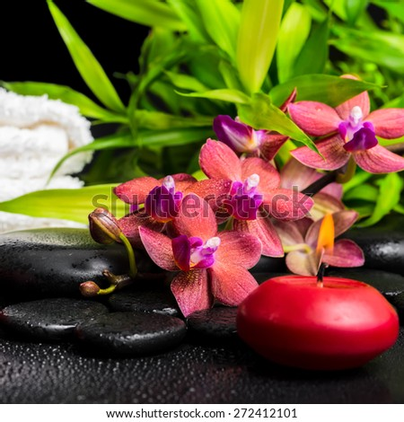 spa concept of blooming twig red orchid flower, phalaenopsis, bamboo with dew, towels and candle on zen basalt stones, closeup - stock photo