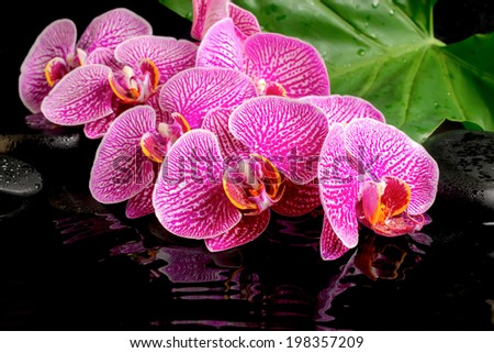 spa concept of blooming twig stripped violet orchid (phalaenopsis ), zen stones, green leaf with drops and ripples reflection on water - stock photo