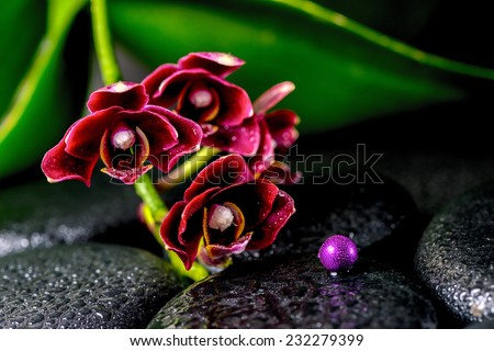spa concept of dark cherry flower orchid phalaenopsis, zen basalt stones with drops and lilac beads - stock photo