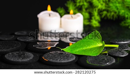 spa concept of green leaf Calla lily, foliage and candles on zen basalt stones with drops in water, panorama