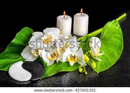 spa concept of orchid flower, phalaenopsis, leaf with dew, candles and Yin-Yang stone texture is isolated on black background