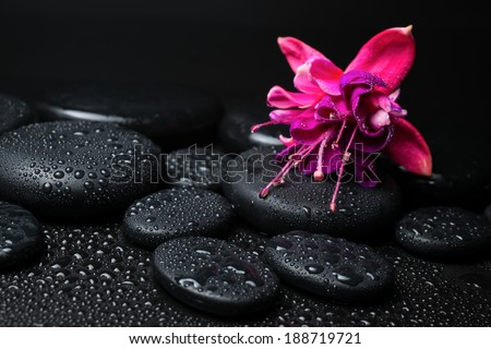 Spa concept of pink with red fuchsia flower and zen stones with drops closeup - stock photo