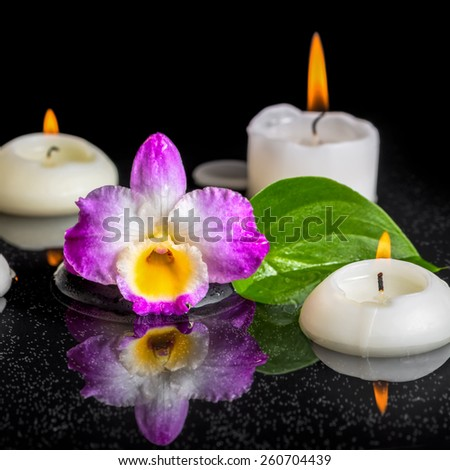 spa concept of purple orchid dendrobium, green leaf with dew and candles on black zen stones in reflection water, closeup   - stock photo