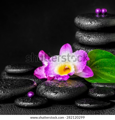 spa concept of purple orchid flower, green leaf, pyramid zen basalt stones with drops and beads, closeup  - stock photo
