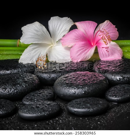 spa concept of white, pink hibiscus flower and natural bamboo on zen basalt stones with drops, closeup  - stock photo