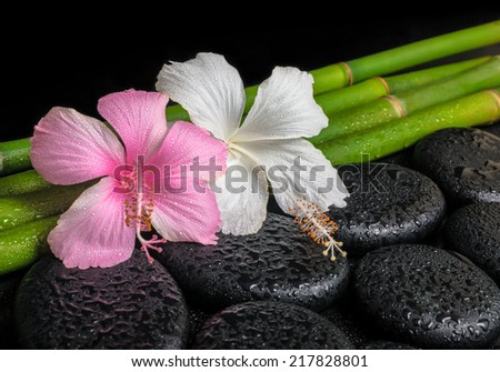spa concept of zen basalt stones, white and pink hibiscus flower on natural bamboo with drops - stock photo