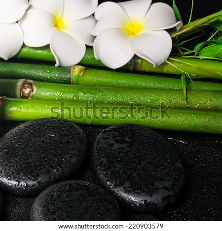 spa concept of zen basalt stones,  white flower frangipani and natural bamboo with dew, closeup  - stock photo