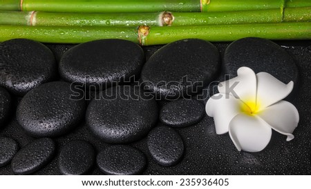 spa concept of zen basalt stones, white flower plumeria and natural bamboo with dew - stock photo
