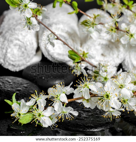 Spa concept of zen stones, blooming twig plum, white towels, closeup  - stock photo