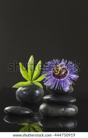 Spa concept passiflora flower and zen stones on black background