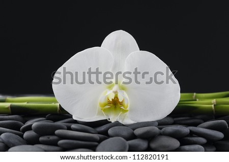 Spa concept-white orchid and thin grove on pebbles