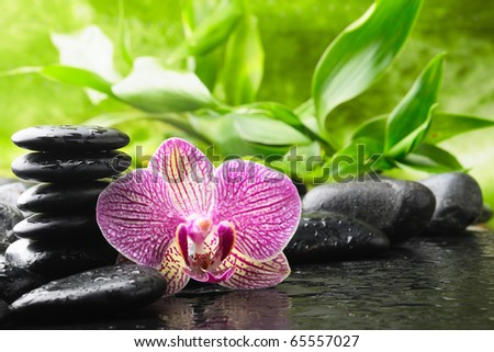 spa concept with orchid and stones - stock photo