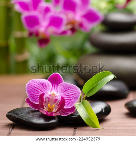 spa concept with zen basalt stones and orchid - stock photo