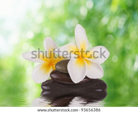 spa concept zen stones with frangipani flowers - stock photo