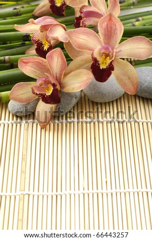 spa frame from/ orchid and stones on bamboo stem background - stock photo