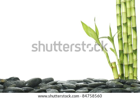 spa frame -pebbles and bamboo grove - stock photo