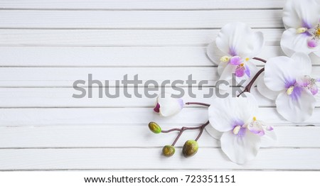 Spa orchid on white wooden background overhead shot