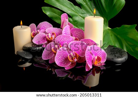 spa set of zen stones with drops, blooming twig stripped violet orchid (phalaenopsis), candles, big green leaf on water - stock photo