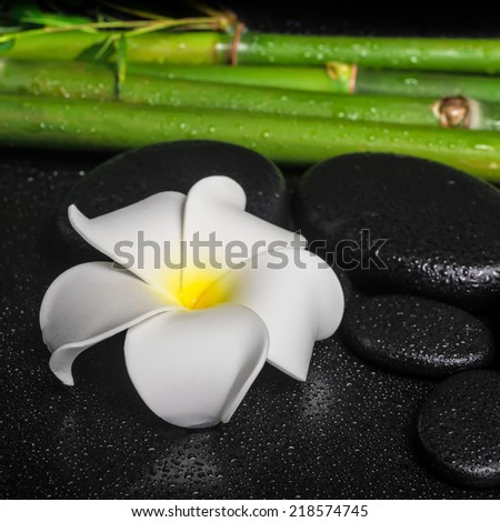spa setting of white flower frangipani, zen basalt stones and natural bamboo with drops, closeup  - stock photo