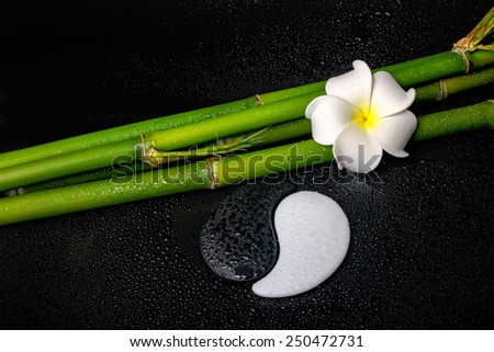 spa setting of white frangipani flower, symbol Yin Yang  and natural bamboo on zen basalt stones with drops - stock photo