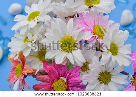 Spa setting on blue background with, stones, rainbow, Chrysanthemum
