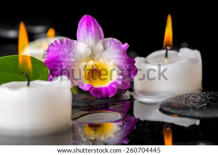 spa still life of purple orchid dendrobium, green leaf with dew and candles on black zen stones in reflection water - stock photo