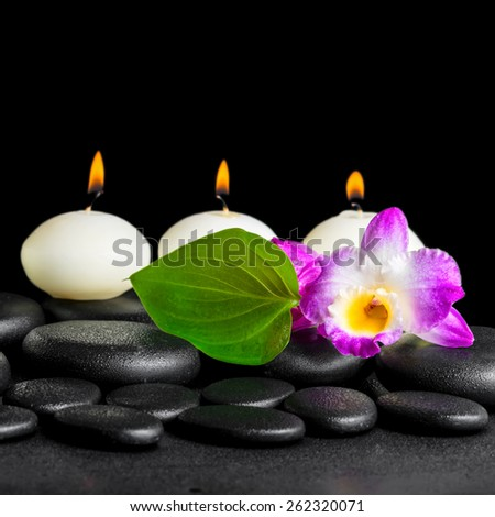 spa still life of white candles, orchid flower dendrobium and green leaf on black zen stones background with dew, closeup  - stock photo