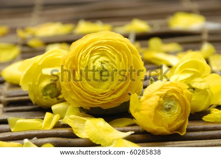 Spa still life with beautiful ranunculus flower with petals on mat - stock photo