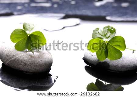 Spa still life with black stones and leaves with water drops - stock photo