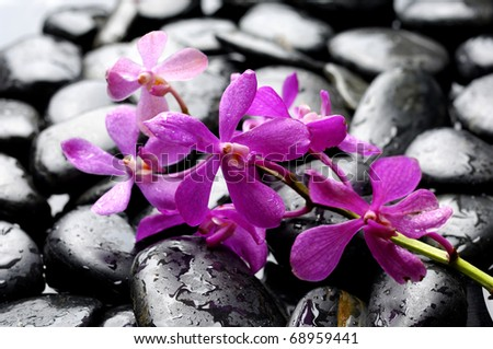 Spa still life with branch of orchid on pebble - stock photo