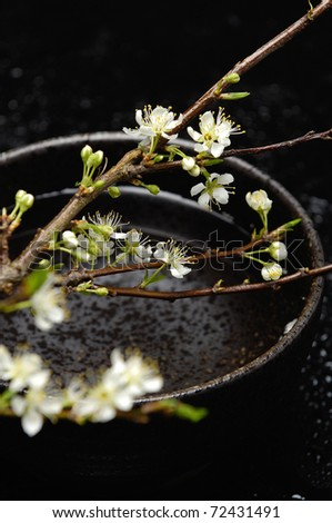 Spa still life with branch of white cherry blossom sakura in bowl - stock photo