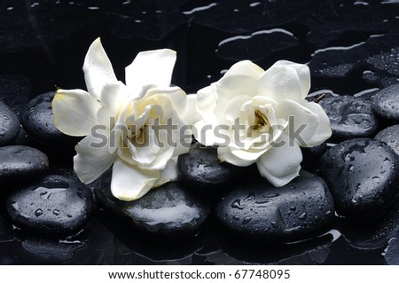 Spa still life with gardenia flower on pebble