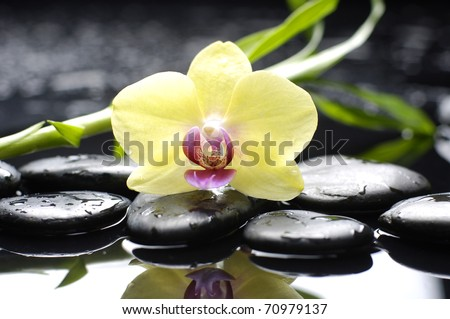 Spa still life with macro of orchid and stone with bamboo