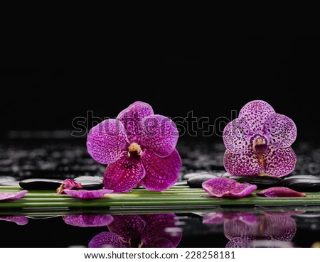 Spa still life with of beautiful orchid and black stones and bamboo grove - stock photo