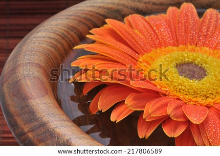 Spa still life with orange daisy floating in water in a wooden bowl