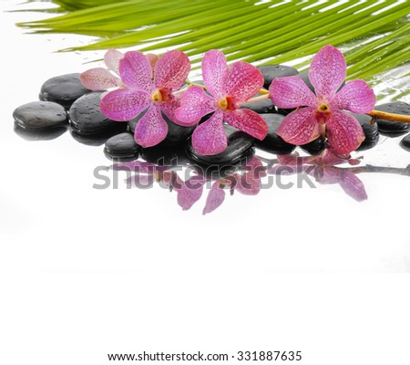 Spa still life with pink orchid,palm and black stone - stock photo