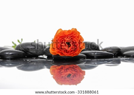 Spa still life with ranunculus and zen stones - stock photo