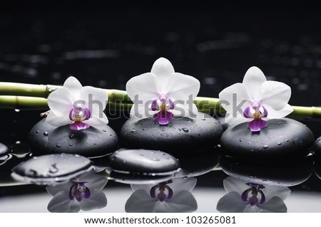 Spa still life with three orchid and zen stones with bamboo grove reflection - stock photo